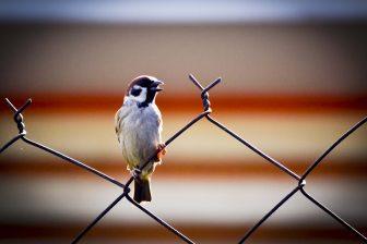 alone-animal-beak-274839